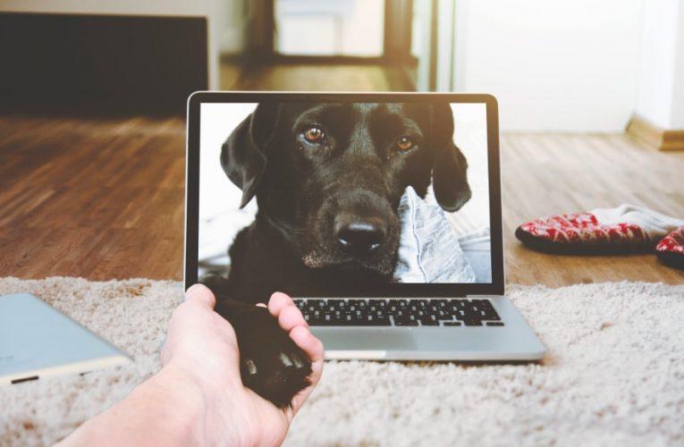 أفضل 5 تطبيقات لمراقبة الحيوانات الأليفة لأجهزة Android و iOS